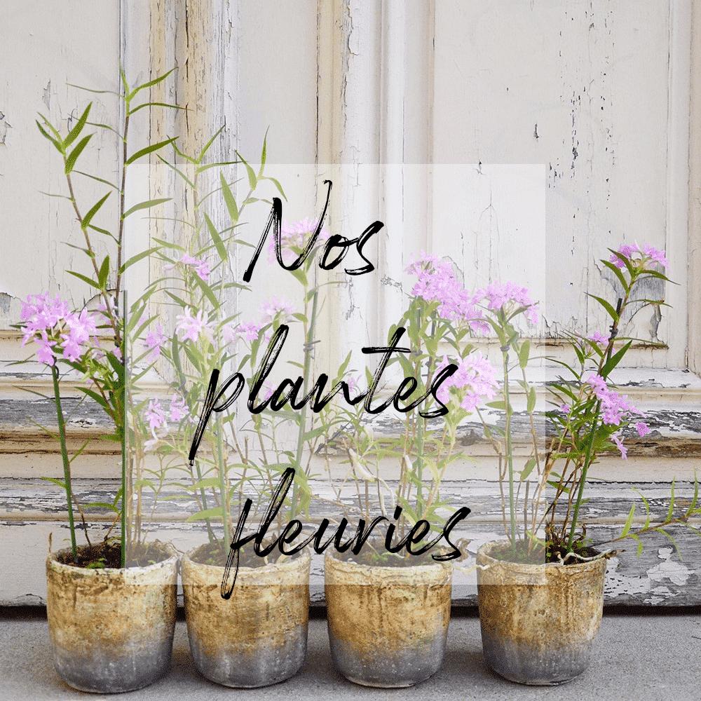 Plante-5-1-1000x1000-min