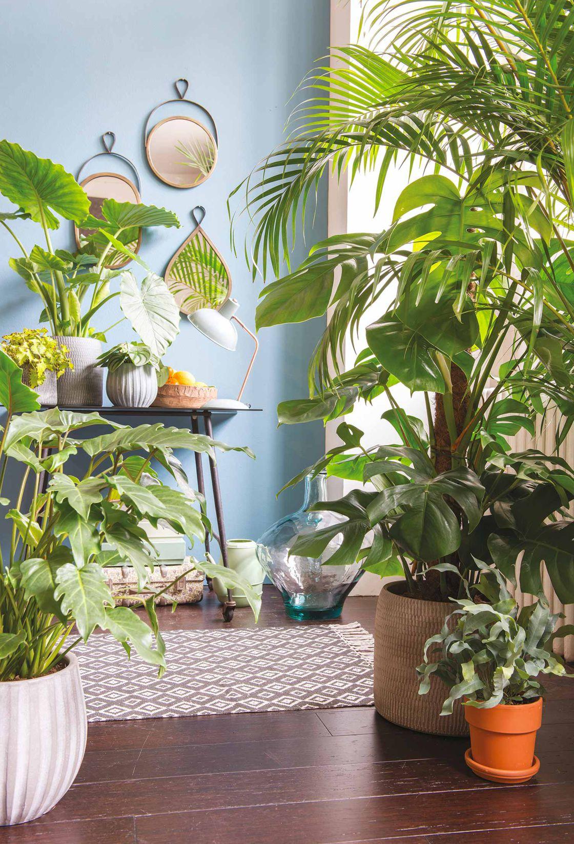 Comme choisir la plante qui vous conviendra?