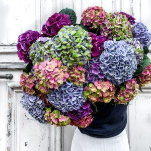Bouquet d'hortensias