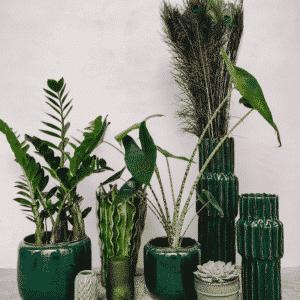 Cache pots et vases verts